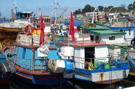 FOTO CALBUCO 2008 37